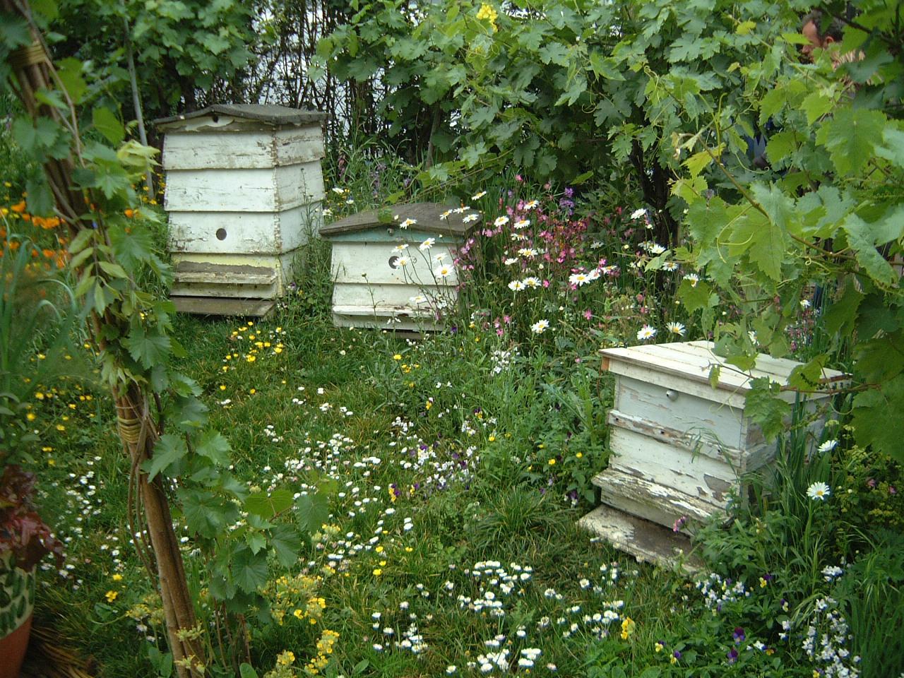 Bienen in blühenden Wiesen