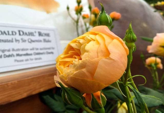 Neue Englische Rose