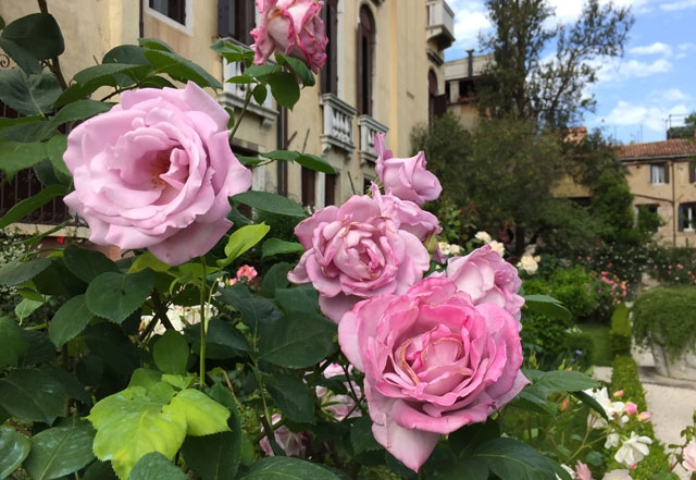 Rosen im Palazzo Malipiero Barnabo in Venedig