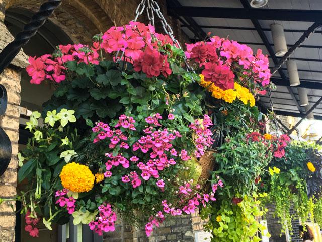 Blühende Blumenampel