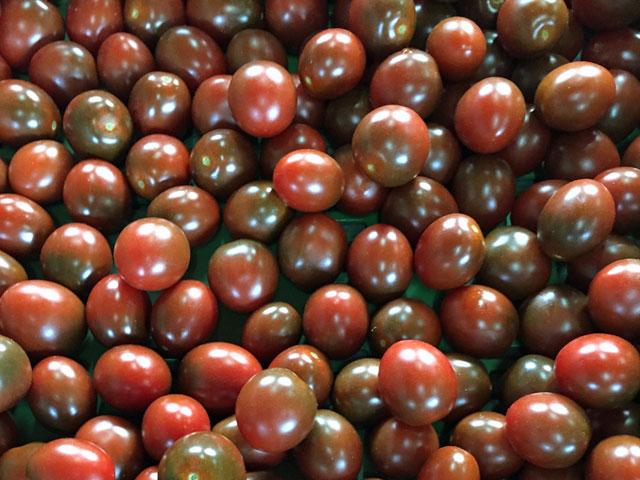 tomatenzeit 10 tipps f r eine lange ernte ploberger. Black Bedroom Furniture Sets. Home Design Ideas