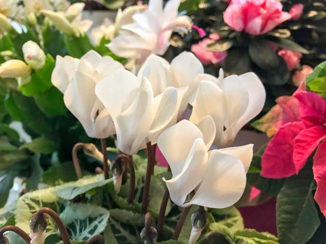 grau raus und farbe rein die zehn besten zimmerpflanzen gegen novembergrau ploberger. Black Bedroom Furniture Sets. Home Design Ideas