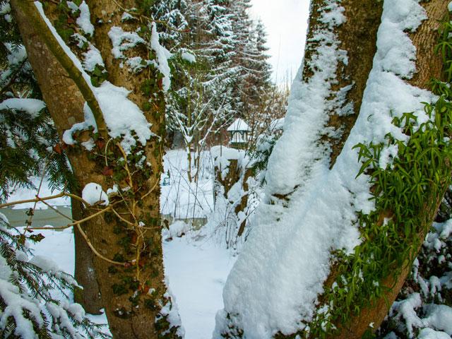 Teich und Rinde im Winter