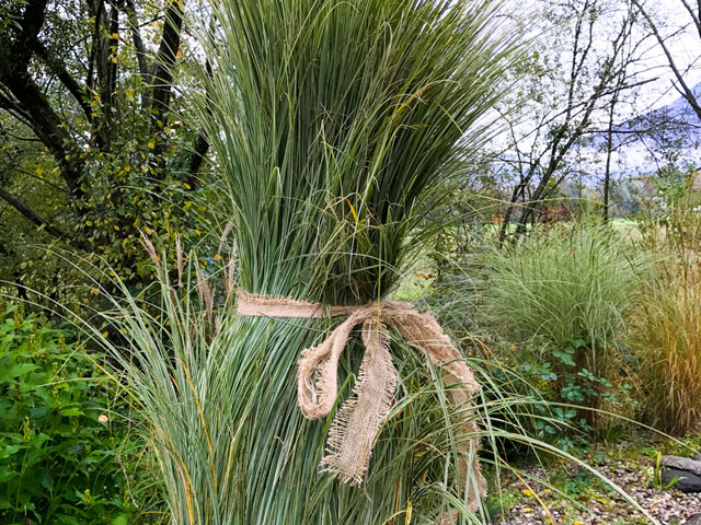 Zusammengebundene Gräser