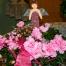 Azaleen - eine der Weihnachtsblumen