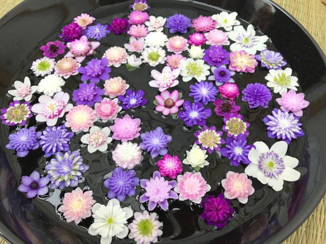Leberblümchen in großer Vielfalt