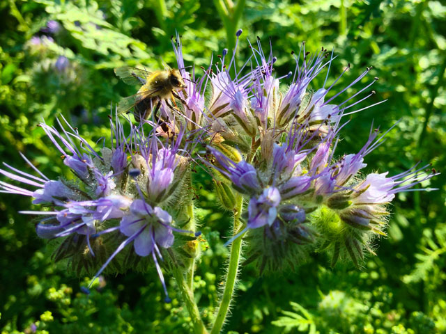 5 Tipps Und 10 Pflanzen Fur Bienenfreundliche Hausgarten Biogartner