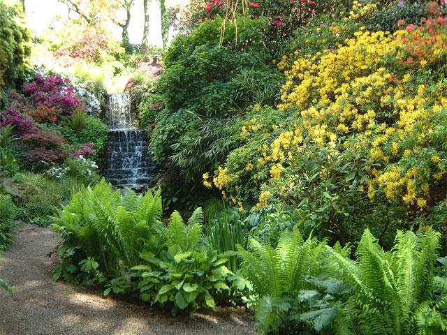 """Die Schönsten """"Schattenseiten"""" Im Garten"""