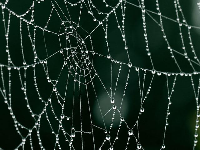 """Gewinnerin der Challenge """"Spinnennetze"""""""
