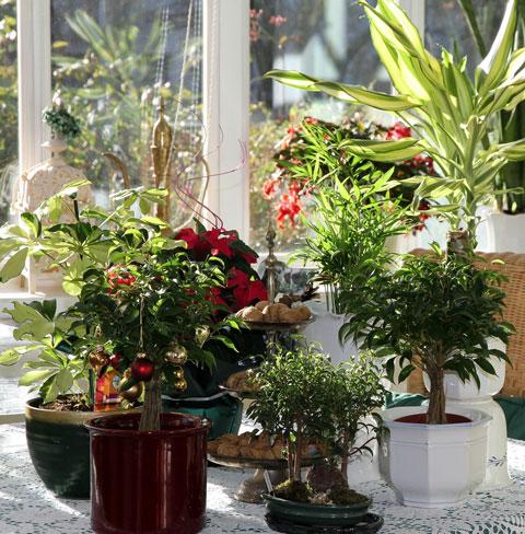 Zimmerpflanzen So Bleibt Das Grune Gluck Gesund Biogartner
