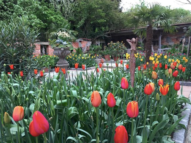 Tulpen im Toskanagarten Ploberger