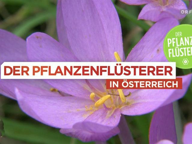 """Sendungstipp """"Der Pflanzenflüsterer"""""""