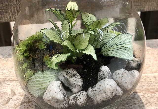 Garten im Glas