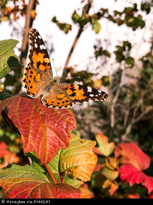 "Siegerbild ""Bunte Blätter"" (Userin Honeybee)"