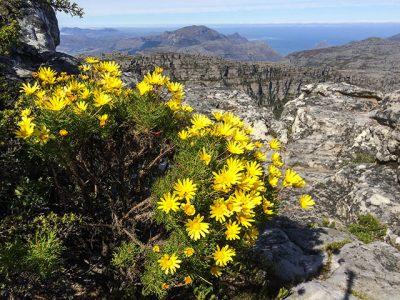 Südafrika - Blick vom Tafelberg