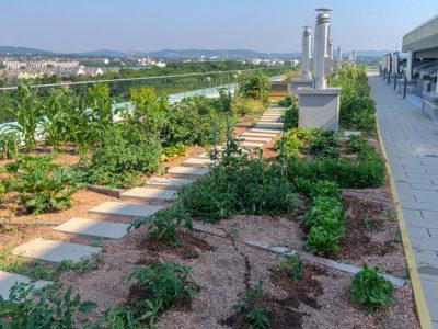 Urban Gardening im 23. Bezirk in Wien