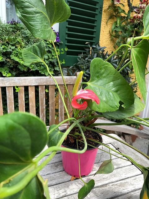 Zimmerpflanzen am Balkon