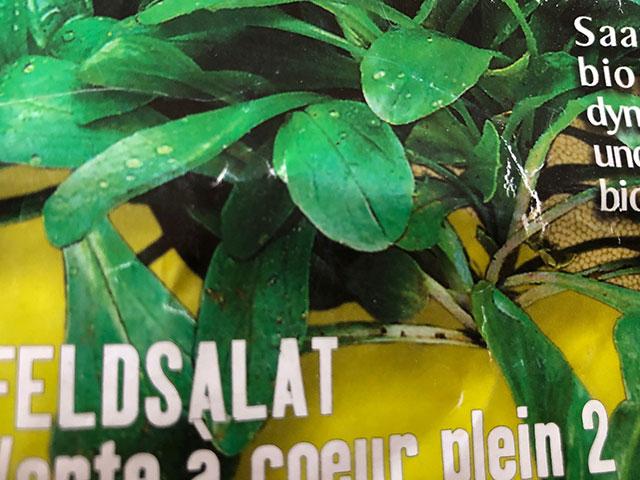 Feldsalat aussäen