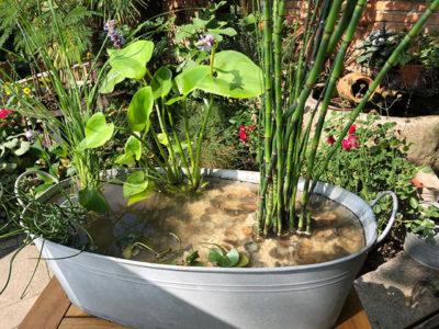 Wassergarten, Mini-Teich