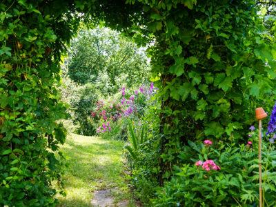 """""""Natur im Garten"""" in Offenhausen (Bild: ORF/L. Mayrhofer)"""
