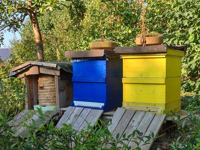 Bienenstöcke im Garten Franke
