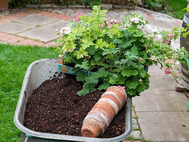Pflanzen setzen (Bild: Cadmos/Christoph Böhler)