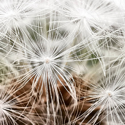 "Siegerbild ""My home is my garden"" - Claudia W."