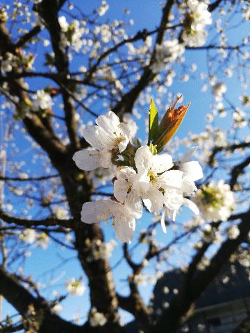 """Siegerbild """"My home is my garden"""" - Marianne H."""