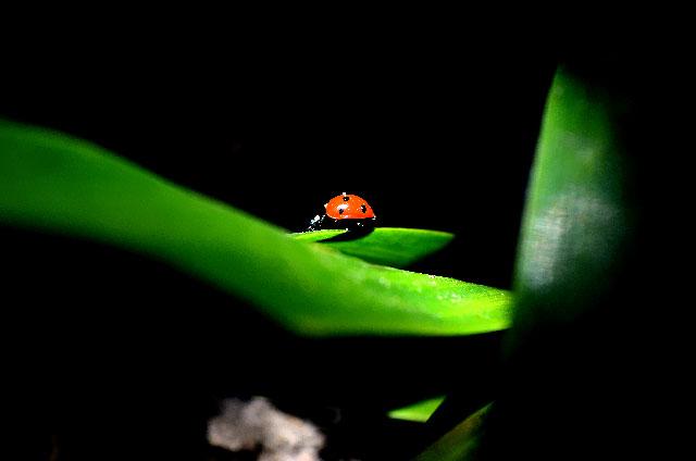 "Siegerbild ""My home is my garden"" - Wolfgang F."