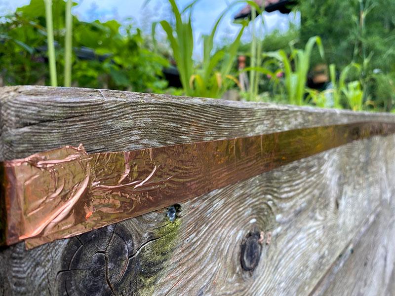 Kupferband als Schneckenzaun