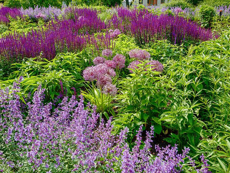 Natur im Garten in Tulln (Bild: ORF/Heribert Fuchs)