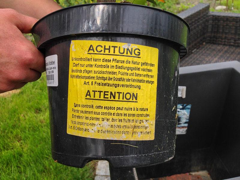 Warnung vor Kirschlorbeer