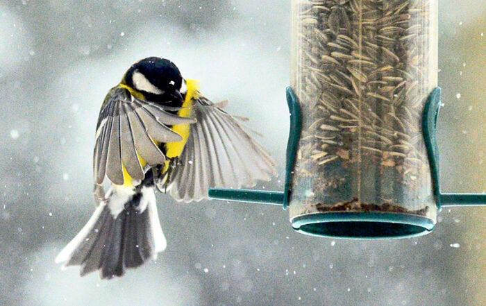 Meise, Vogelfutter (Bild: Blaubaer)