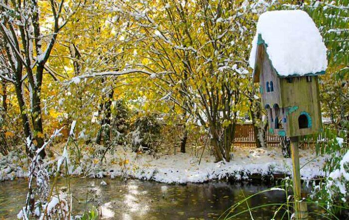 Gartenteich - auch im Winter ein Blickpunkt