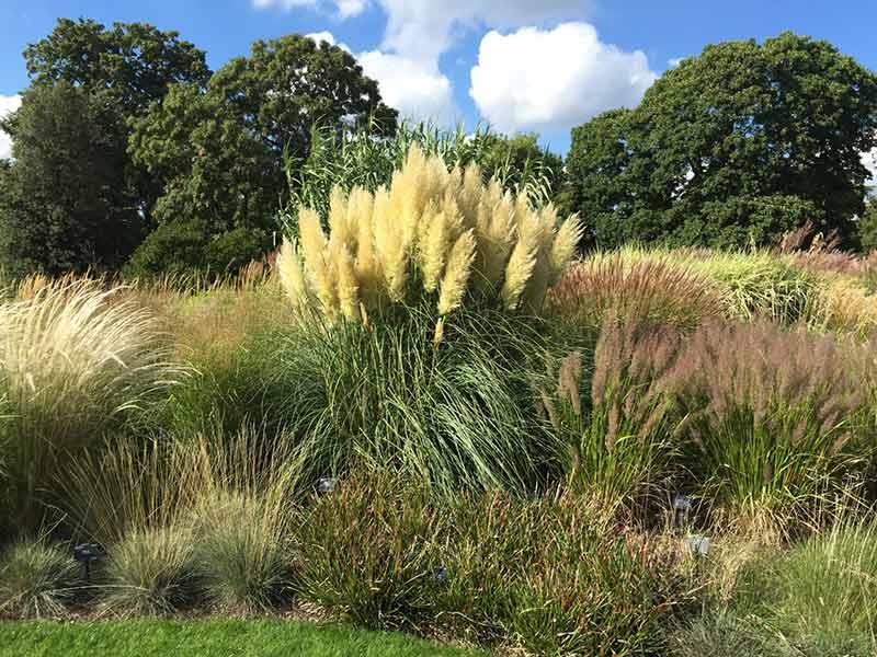 Gräser - prächtige Herbststauden
