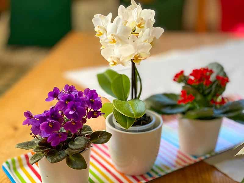 Minipflanzen, Zimmerpflanzen