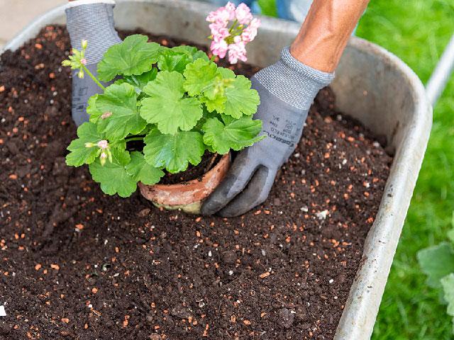 Pflanzen setzen, Erde (Bild: Cadmos/C. Böhler)